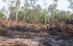Phát hiện hàng chục vụ phá rừng nhưng... không lấy gỗ ở Phú Quốc
