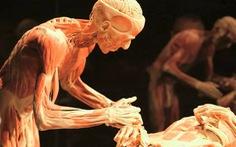 Tranh luận quanh triển lãm về cơ thể và nội tạng người