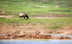 25 hồ Nghệ An xuống mực nước chết, 23.000ha lúa khô hạn