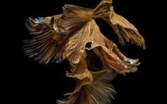 Ngắm những 'vũ công dưới nước' huyền bí của nhiếp ảnh gia Thái
