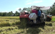 Làm gì để nông sản bớt nhiễm độc?