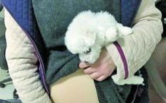 Sinh viên Trung Quốc bị phạt vì nhét chó vào bầu giả lên máy bay