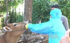 Quý II sẽ có vắc xin lở mồm long móng do Việt Nam sản xuất