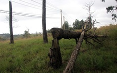 Hơn 50% cán bộ, đảng viên huyện Ea Súp sử dụng 2.000ha đất rừng