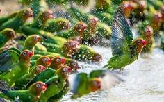 Những bức ảnh động vật hoang dã ấn tượng