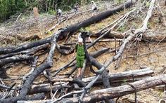 Đề nghị truy tố vợ chồng phá 3,6ha rừng phòng hộ Tiên Lãnh