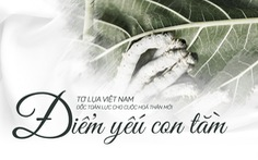 Tơ lụa Việt Nam: Lỗi tại con tằm?