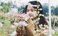 Vườn hoa tam giác mạch  xuất hiện ở Sài Gòn