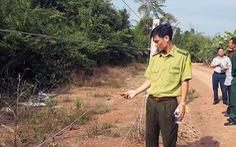 Kiến nghị xây thêm 20km hàng rào điện bảo vệ voi rừng