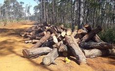 Khởi tố người lợi dụng tận thu để phá rừng cộng đồng