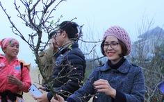 Đổ xô 'săn' hoa đào, hoa mận núi rừng Tây Bắc