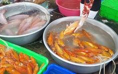 Cá chép Trung Quốc 'được mùa' dịp cúng ông Công, ông Táo