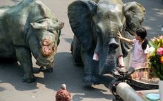 Tê giác, voi quỳ 'kêu cứu' ở sân chùa Vĩnh Nghiêm, Minh Đăng Quang