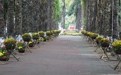 Hàng loạt giỏ hoa trang trí tết trên đường phố Nghệ An bị trộm