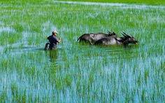 Hà Tiên, thành phố của những cánh đồng xanh