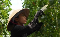 Vòi tiền bạc khi tiếp nhận lao động Việt, 2 tổ chức ở Nhật bị đóng cửa