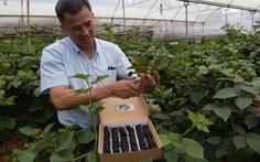 Đà Lạt trồng thành công phúc bồn tử đen
