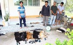 Bắt quả tang 3 người chuyên trộm chó bằng súng điện
