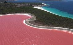 Video: Độc đáo hồ nước màu hồng trên hòn đảo Middle