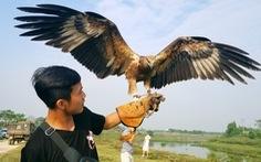 Mãn nhãn với những chú chim săn mồi sải cánh dũng mãnh