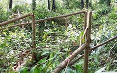 Hơn 4.000 cây keo rừng trồng của dân bị kẻ xấu chặt đứt ngang