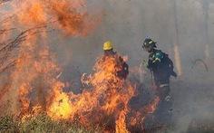 Tìm ra phương pháp phòng chống cháy rừng thân thiện với môi trường