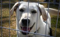 Seoul đóng cửa toàn bộ lò mổ chó