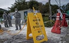 Lo dịch tả heo châu Phi, lính Hàn Quốc nhận lệnh diệt heo rừng Triều Tiên