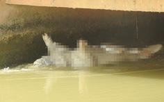 Nghệ An: Dân vứt heo chết trôi đầy sông, bất chấp dịch lan khắp nơi
