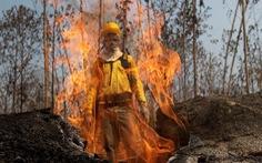 Thủ phạm hủy diệt sự sống - Kỳ 1: Rừng tàn theo ngọn lửa