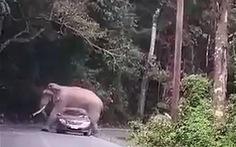 Voi đè suýt bẹp xe hơi khiến du khách khiếp vía