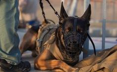 Quân khuyển Mỹ: Những 'quả tên lửa lông lá'