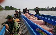 Bắt gần 2 tấn heo lậu từ Campuchia vào Việt Nam