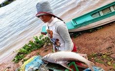Nếu nay mai Biển Hồ  hết cá...