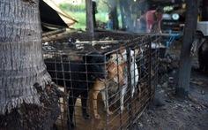 Dân Campuchia vừa mổ chó vừa van nài: 'Xin hãy tha thứ cho tao!'