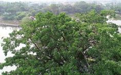 Phát hiện hàng trăm con chim cổ rắn quý hiếm tại khu du lịch Bửu Long