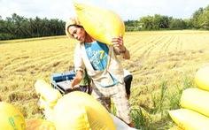 Cơ hội nâng tầm hạt gạo Việt