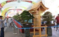 Chiêm ngưỡng những tác phẩm bonsai, suiseki tiền tỉ