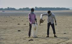 1.500 con chim chết rải 5-7km trên đường di trú