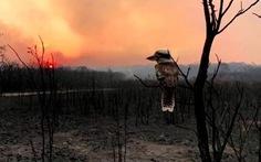 Tấm ảnh thiên nhiên làm tan nát lòng người