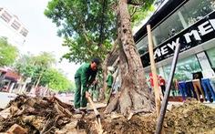 Thay hơn 300 cây xanh làm phố đi bộ, Vinh 'đã xem xét cẩn trọng'