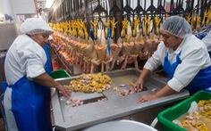 Phản đối hình thức nuôi nhốt tàn nhẫn, New York cấm bán gan ngỗng, gan vịt