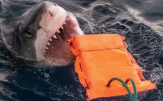Đồ lặn chống cá mập cắn