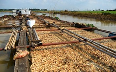Hệ thống sông Đồng Nai: tứ bề 'thọ' nguồn gây ô nhiễm