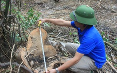 Video: Phá rừng tràn lan ở huyện miền núi Bá Thước