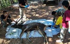 Hươu hoang dã chết 'uất nghẹn' sau khi ăn 7kg rác nhựa