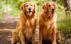 Tuyển người chăm chó toàn thời gian, trả lương hơn 920 triệu đồng/năm
