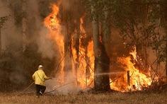 Bắt gã trai trẻ đốt rừng rồi tham gia 'tình nguyện' chữa cháy