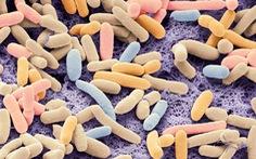Tạo ra vi khuẩn chỉ 'ăn' CO2