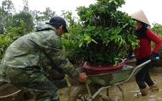 Thủ phủ mai miền Trung đưa mai đi trốn bão